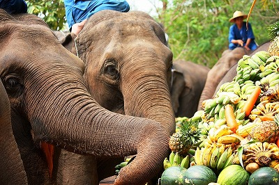 Thailand%20Elephant%20Day%20-%207.jpg